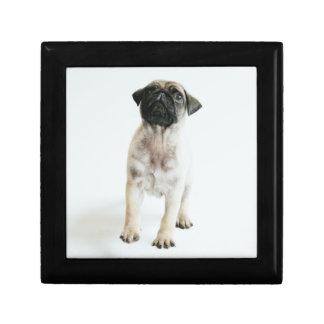 Cute Pug Puppy Gift Box