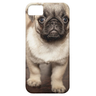 Cute Pug Puppy iPhone 5 Case