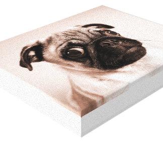 Cute Pug Puppy Portrait Stretched Canvas Prints