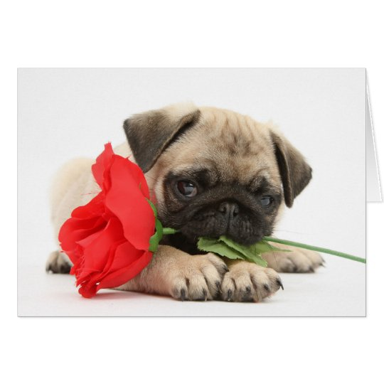 Cute Pug Puppy with Red Rose Valentine Card