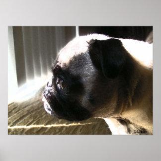 Cute Pug, Side Profile Poster