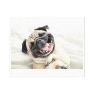 Cute pug smiling canvas print