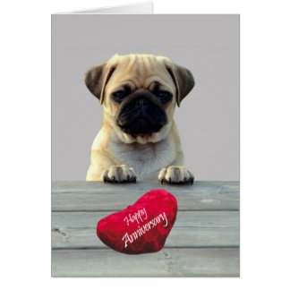 Cute Pug Wishing Happy Anniversary greeting card