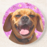 Cute Puggle Beverage Coaster