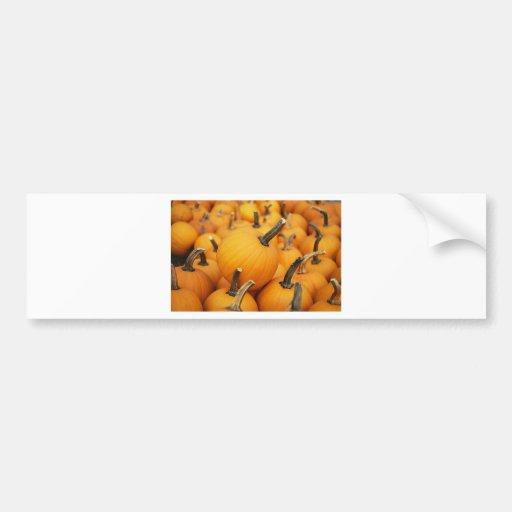 Cute Pumpkins In The Pumpkin Patch Bumper Sticker