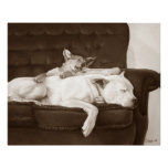 Cute puppy and white dog realist animal art Poster Perfect Poster