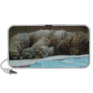 cute puppy asleep on rug speakers