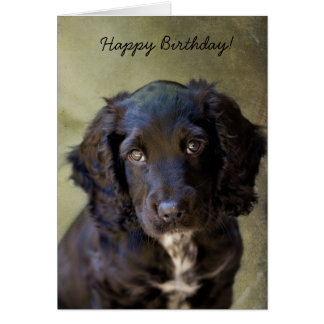 Cute Puppy card Greeting Cards