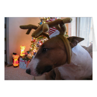Cute Puppy Christmas Cards