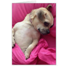Cute Puppy Dog Chug in Pink Sheets Greeting Card