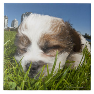 Cute puppy dog in park, Vancouver, BC, Canada. Large Square Tile