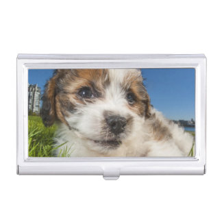 Cute puppy dog (Shitzu) Business Card Holder