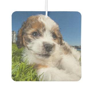 Cute puppy dog (Shitzu) Car Air Freshener