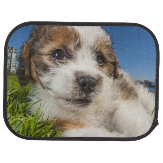 Cute puppy dog (Shitzu) Car Mat