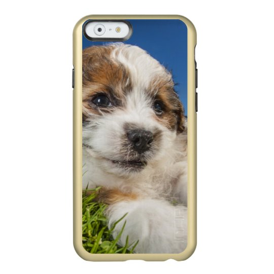 Cute puppy dog (Shitzu) Incipio Feather® Shine iPhone