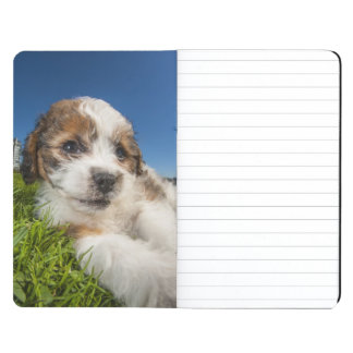 Cute puppy dog (Shitzu) Journal