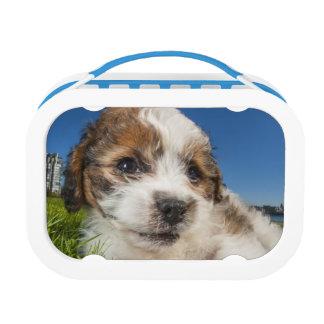 Cute puppy dog (Shitzu) Lunch Box