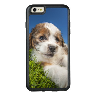Cute puppy dog (Shitzu) OtterBox iPhone 6/6s Plus Case