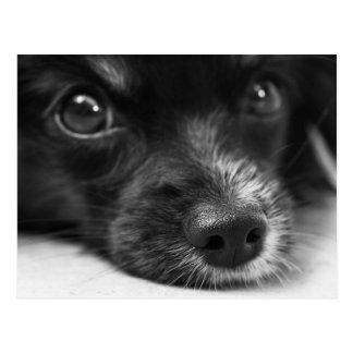 Cute Puppy Face Postcard