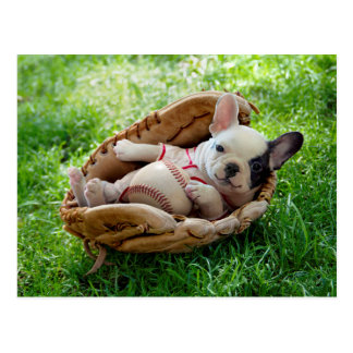 Cute Puppy in a Baseball Mitt Postcard