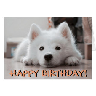 Cute puppy photo birthday card