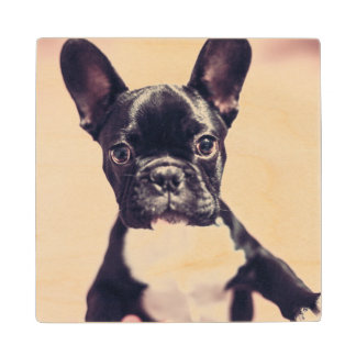 Cute puppy portrait wood coaster