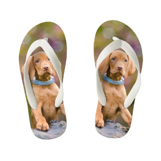 Cute puppyeyed Hungarian Vizsla Dog Puppy Photo -- Flip Flops