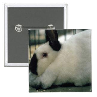 Cute Rabbit 15 Cm Square Badge