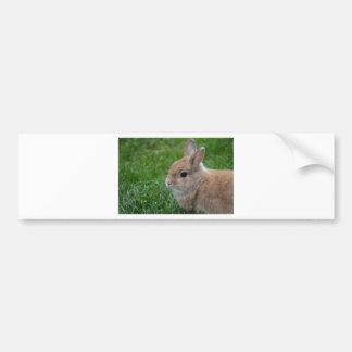 Cute Rabbit Bumper Sticker