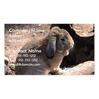 Cute Rabbit Pack Of Standard Business Cards