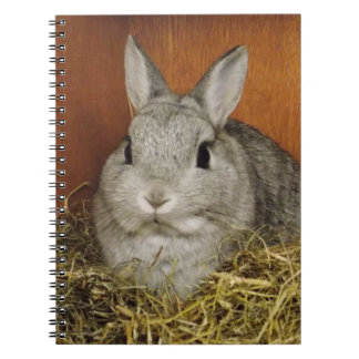 Cute Rabbit Notebook