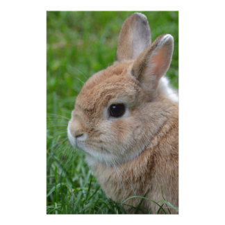 Cute Rabbit Stationery