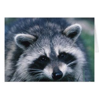 Cute Raccoon Close-Up Card
