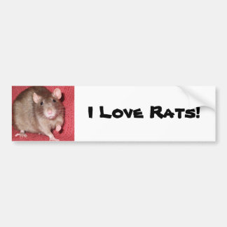 Cute Rat Bumper Sticker