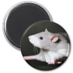 Cute Rat painting Refrigerator Magnets