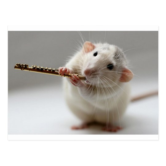 Cute rat playing flute postcard