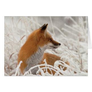 cute red fox card