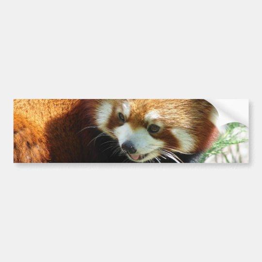 Cute Red Panda Bear Bumper Sticker
