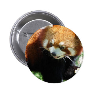 Cute Red Panda Bear Button