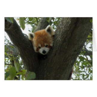 Cute Red Panda Card