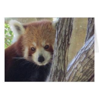 Cute Red Panda Card
