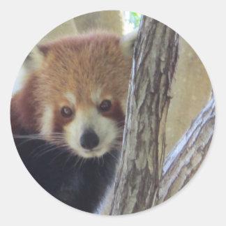Cute Red Panda Classic Round Sticker