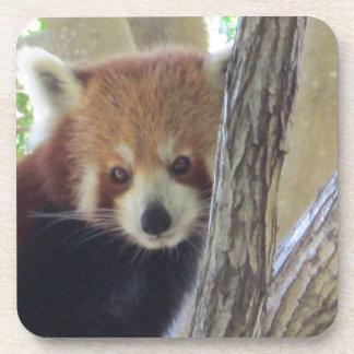 Cute Red Panda Coaster