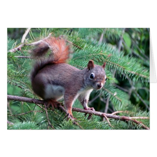 Cute Red Squirrel Card