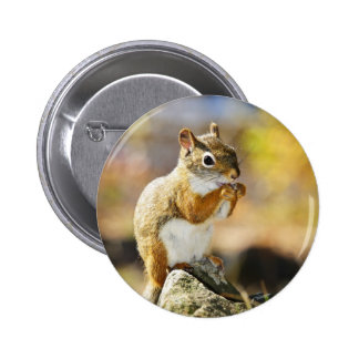 Cute red squirrel eating nut pins