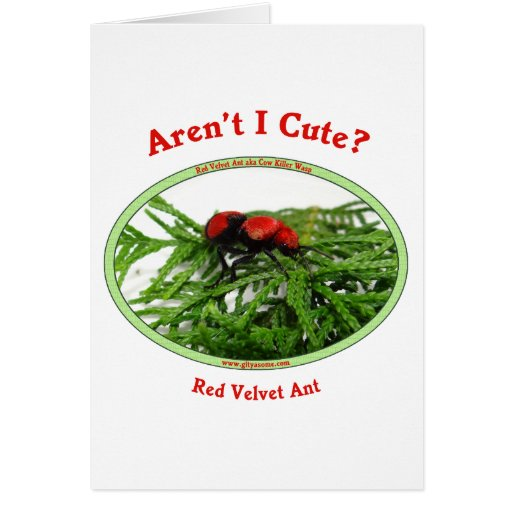 Cute Red Velvet Ant Wasp Card