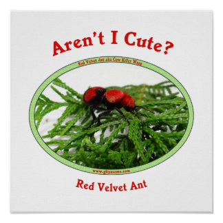 Cute Red Velvet Ant Wasp Poster