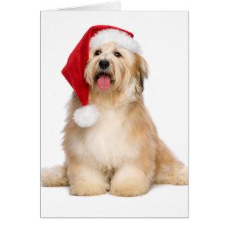 Cute Reddish Sitting Christmas Havanese Puppy Card
