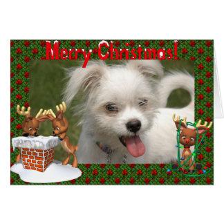 Cute Reindeer  Photo Frame Christmas Card