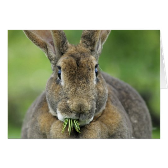 Cute Rex Bunny Rabbit Eating Fir Needles Card